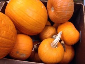Thanksgiving-Schwebach-Pumpkin-2015